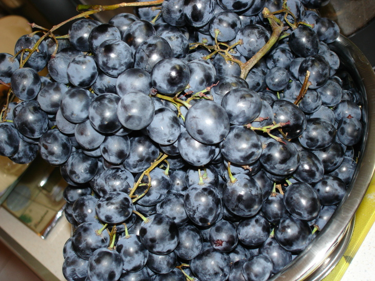 Как в домашних условиях сделать вино с винограда изабелла